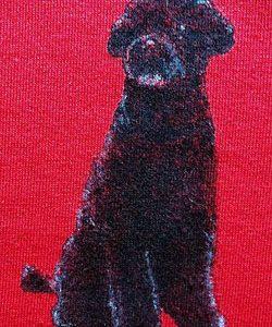 Ladies Short Sleeve Tshirt with Sitting Dog Close Up