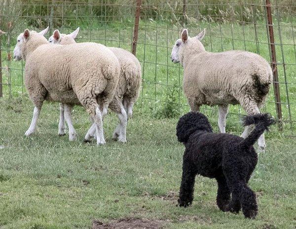 Herding Workshop