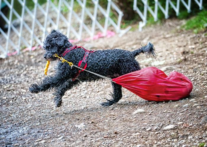 Working Water Dog Gear Bag Retreive