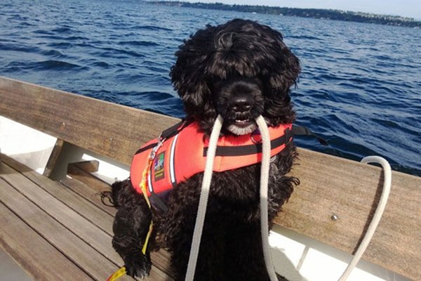 Pacific Northwest Portuguese Water Dog Club